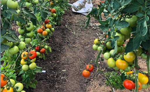Lyckas med odlingen i vår